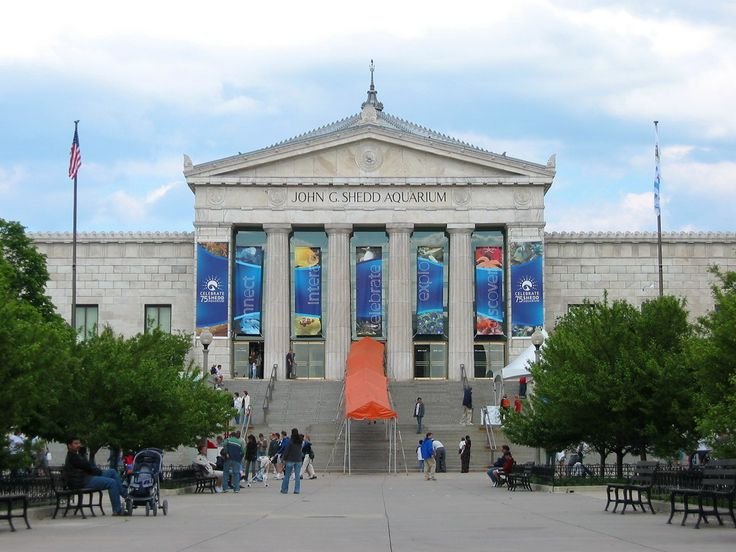 The Shedd Aquarium Chicago Il Places I 39 Ve Been