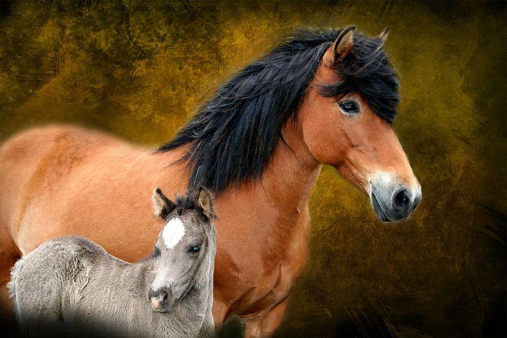 Baby Horses - Cute Photos