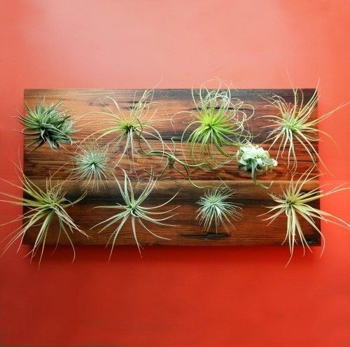 Diy air plant wall hanging by leanne greenstate for Air plant wall hanger