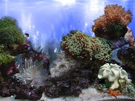 ... - Aquariums/Coral/etc. Pinterest Fish Tank Landscape Ideas