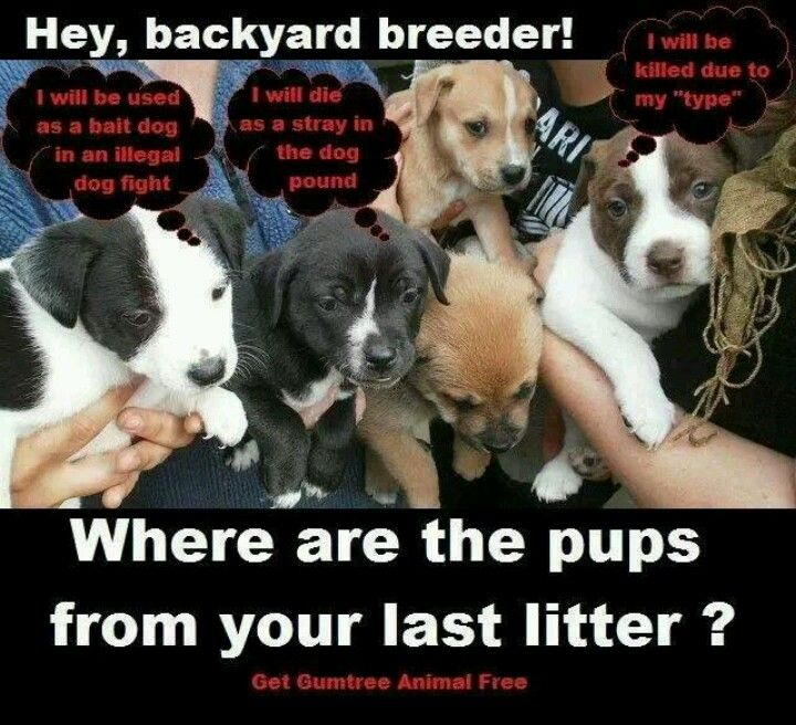 by chrissy snoeberger on backyard breeders need to be stopped