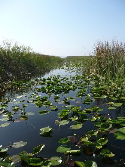 Experience florida s wild side with an airboat ride for Boggy creek fish camp