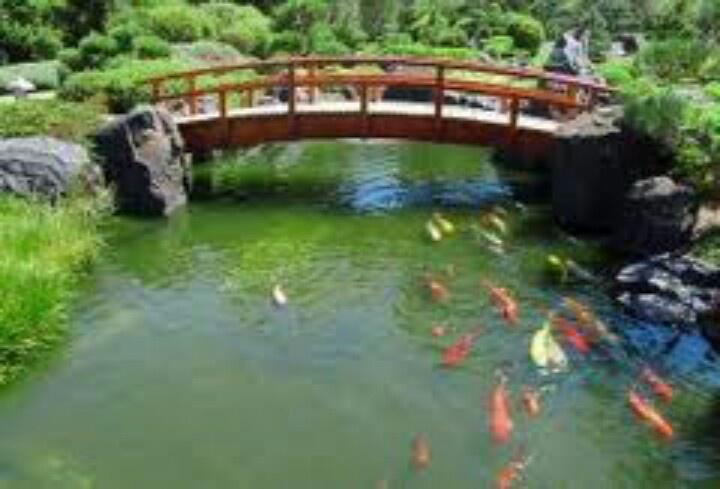 Koi pond with bridge ponds pinterest for Koi pond bridge