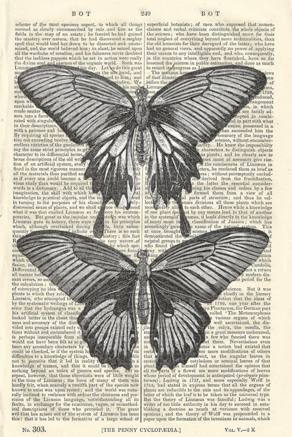 Schmetterling Diagramm Black And White Vintage von PigAndGin   10 00Vintage Butterfly Black And White