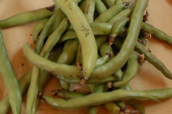 Fava bean bruschetta | Sounds Scrumdiddlyumptious | Pinterest