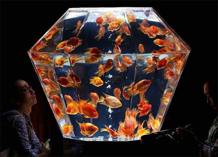 Pretty cool fish tank Fish tanks Pinterest