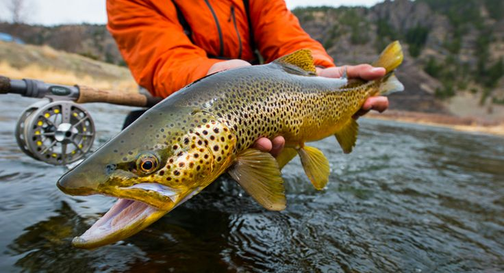 Bozeman montana fly fishing guides travel bozeman mt for Montana fishing trips