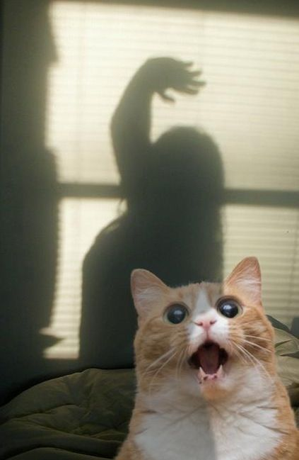kitty horror movie !!!