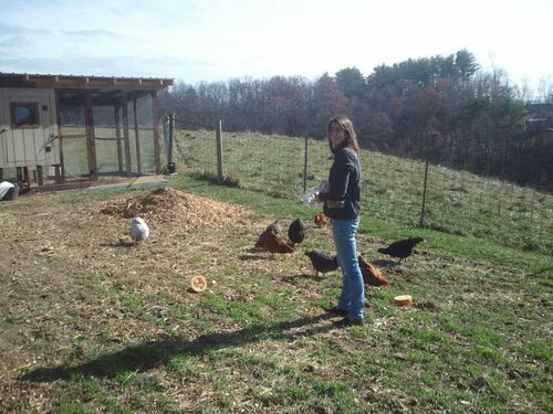 Pickin the Right Frickin Chicken Guide to Picking Backyard Chicken