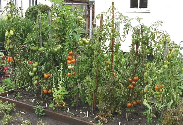 Square Foot Gardening Go Vertical Shannonigan 39 S How Does Your Garden Grow Pinterest