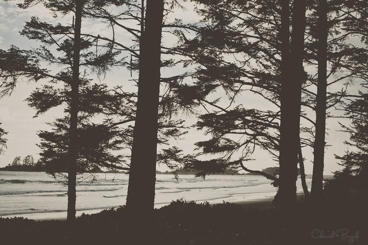 Trees & sea