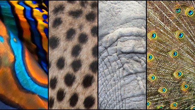 animal patterns in nature - photo #12