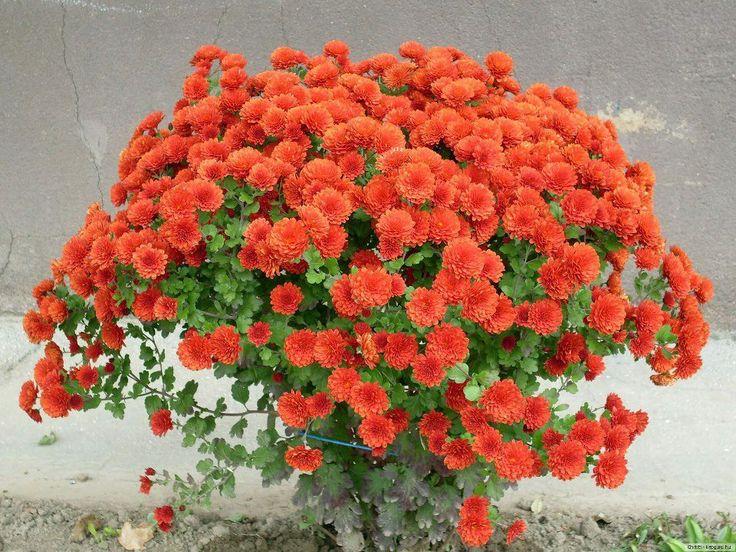 pin by marc cantin on les plus belles fleurs du monde pinterest. Black Bedroom Furniture Sets. Home Design Ideas