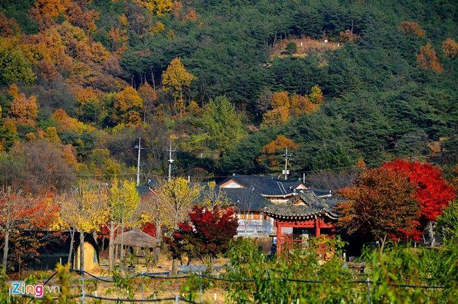 Ngay tại những vùng ngoại ô, cảnh sắc mùa thu cũng thật hữu tình.
