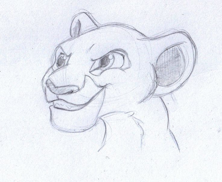 how to draw nala from lion king