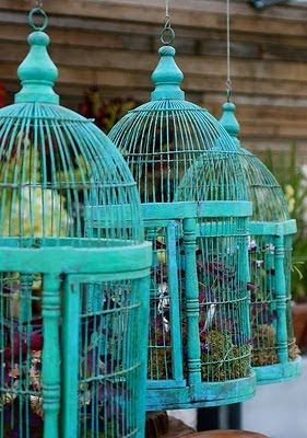 Turquoise bird cages with plants inside