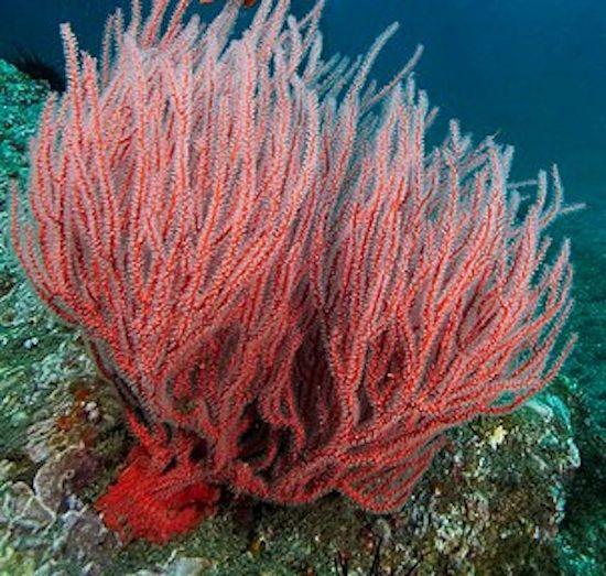 Found on treehugger comUnderwater Ocean Plants