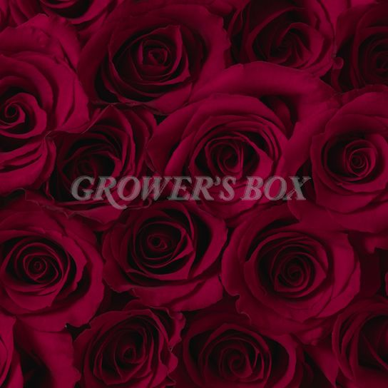 We are ready for Valentine's Day... are you? Shop GrowersBox.com for exceptional deals on bulk flowers for fundraisers. Fundraising with flowers is an excellent way to raise money for your school, church or other organization.