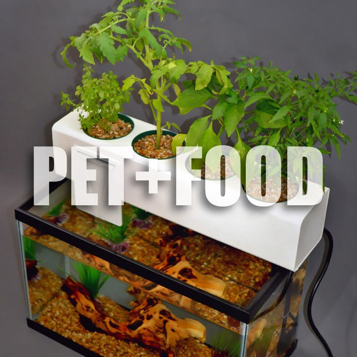 Pin by elizabeth turcotte on garden pinterest for Hydroponic aquarium with fish