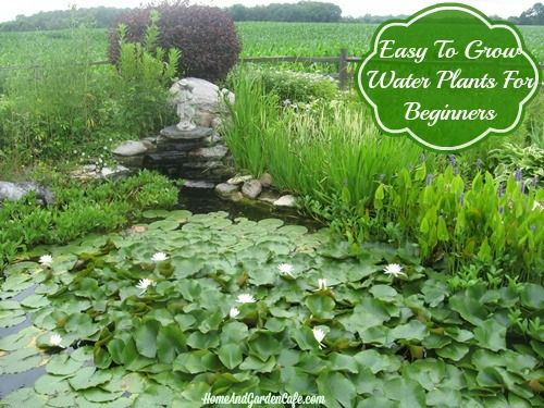 Easy to grow water plants for beginners outdoor spaces for Easy to grow outdoor plants