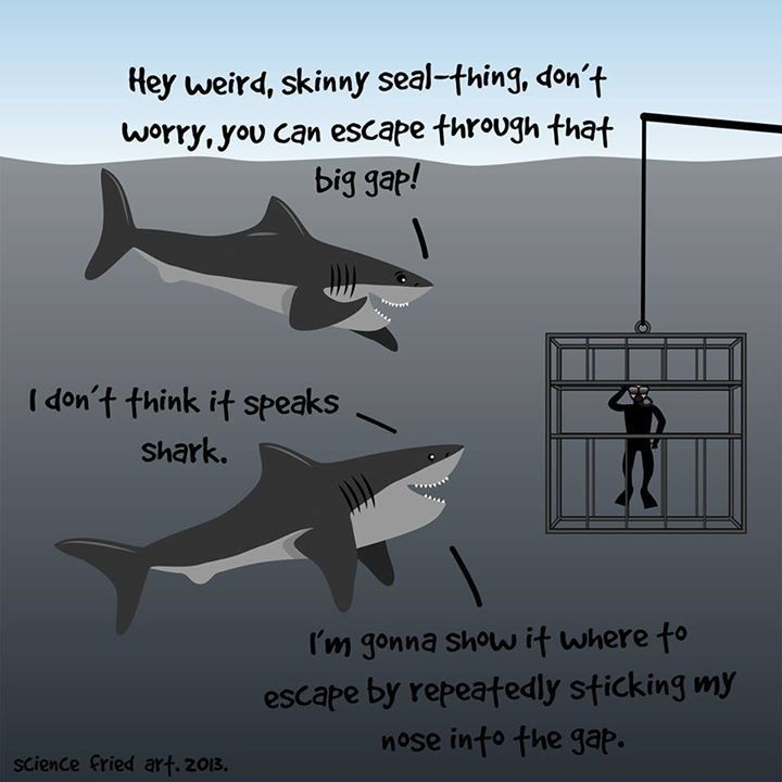 I always suspected sharks are nice guys