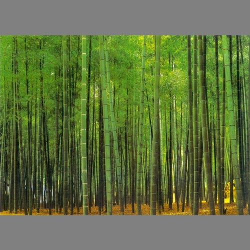 Related pictures bamboo forest mural wallpaper 8 part 1811 for Bamboo forest mural wallpaper