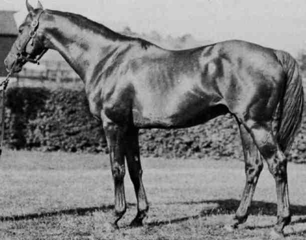 Hard Tack, Seabiscuit's sire and Man O' War's son