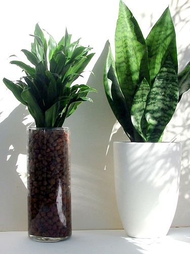 Pin by cameo on growing houseplants pinterest for Indoor plant maintenance