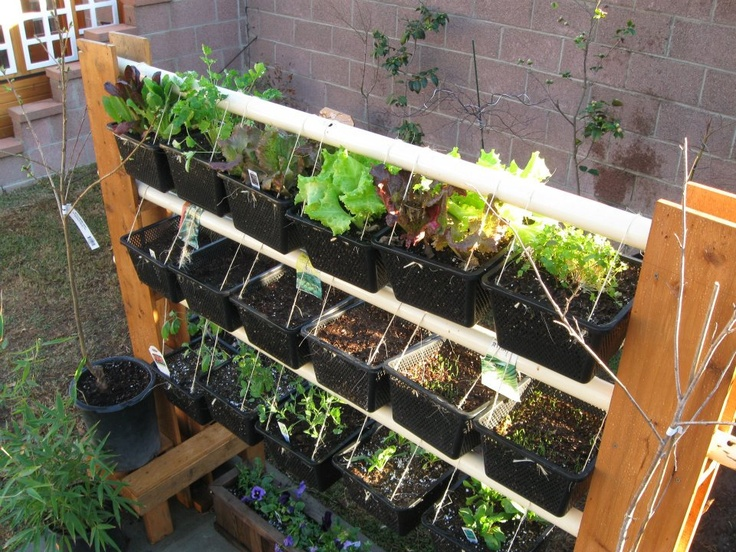 Vertical Garden Rack from old fence and swing set, added more rows of vegetables/herbs.