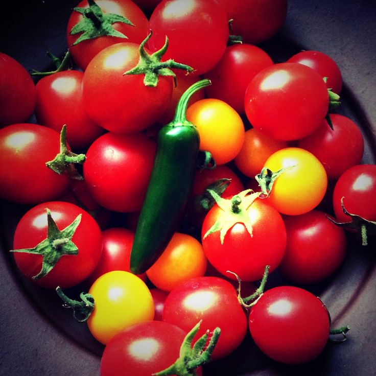 ... Serrano - homegrown and yummy. #organic -- ideal size for containers