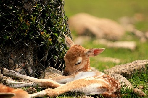 ...little angel of the forest asleep :)