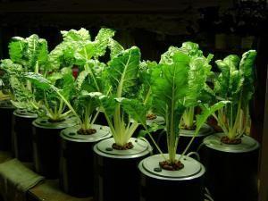 Indoor Hydroponic Vegetable Garden Hydroponics Pinterest