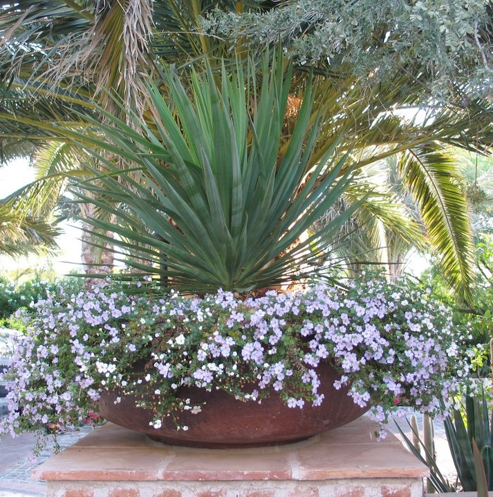 Potted plant idea pot plant ideas pinterest for Planting flowers in pots ideas