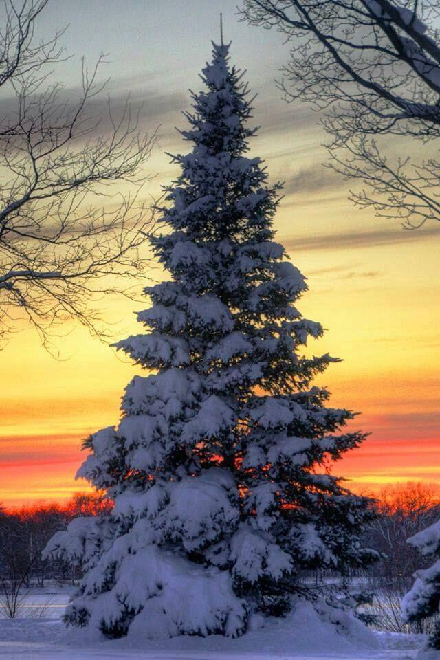 The Most Beautiful Christmas Tree Winter Pinterest