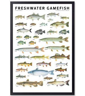 Freshwater Gamefish Yo Pinterest