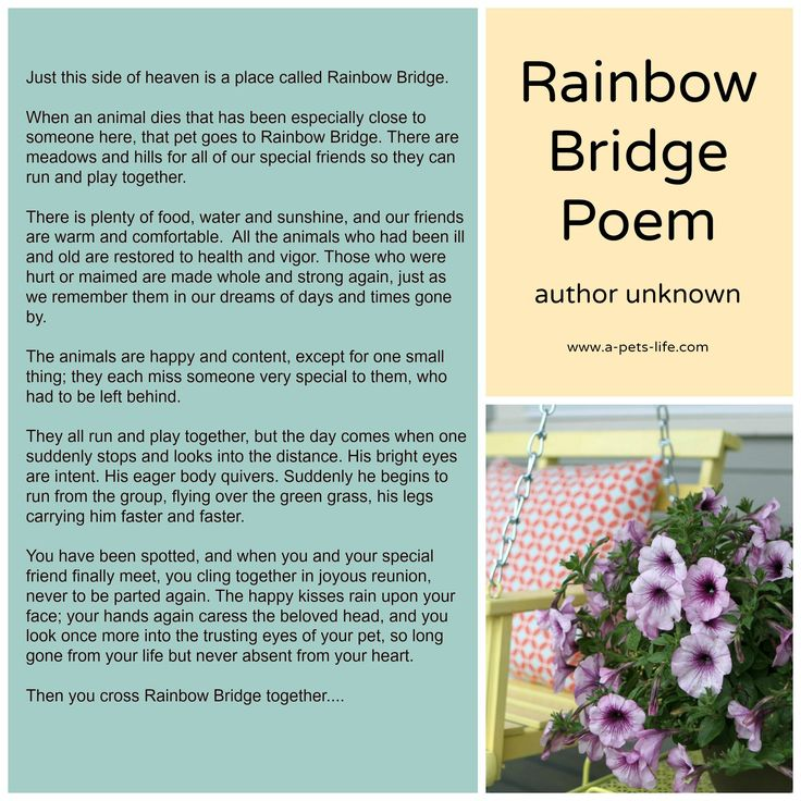 Rainbow Bridge Poem | A Pet's Life - Pet Loss | Pinterest