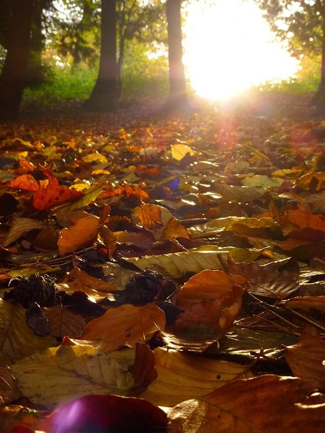 November leaves autumn leaves pinterest