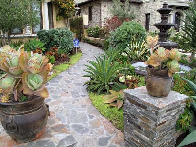Succulent garden front yard mediterranean landscape for Garden design using succulents