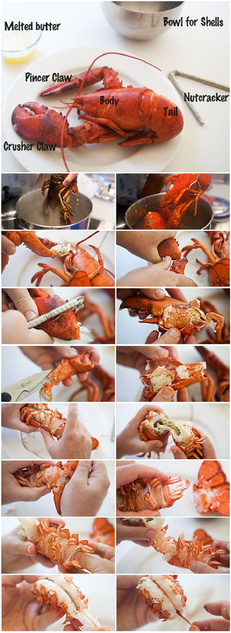 How to boil and eat lobster | Shrimp,Crab,Scallops ,& Lobster | Pinte ...