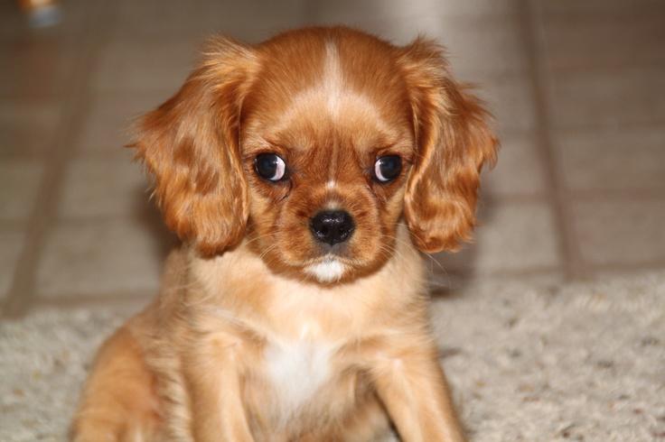 cutest puppy ever puppies pinterest