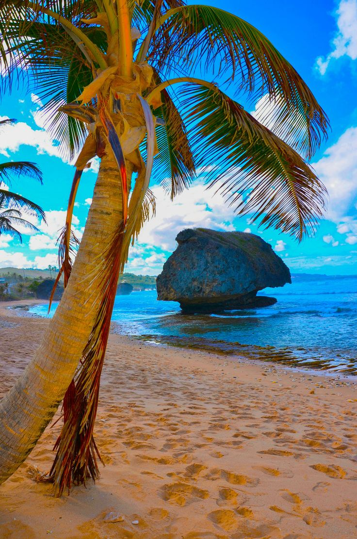 Bathsheba - Double click on the photo to get or sell a travel guide to #Barbados