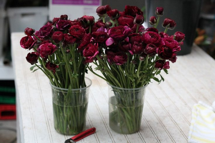 Colour palette rich burgundy flowers pinterest for Flowers in season now
