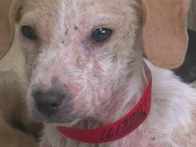 Pin by big dog ranch rescue on big dog ranch media pinterest