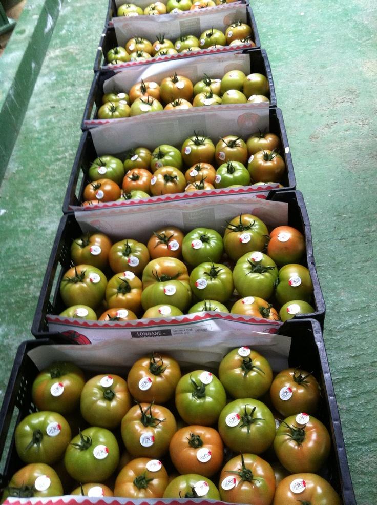Más frescos imposible! Tomates de Longane Urdaibai, en hermeneus.es