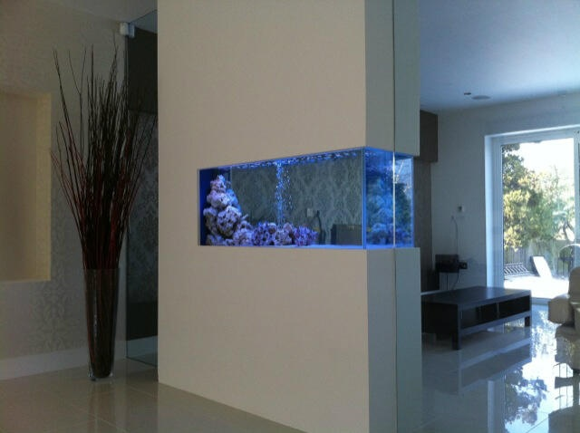 Glass partition fish tank home pinterest - Fish tank partition wall ...