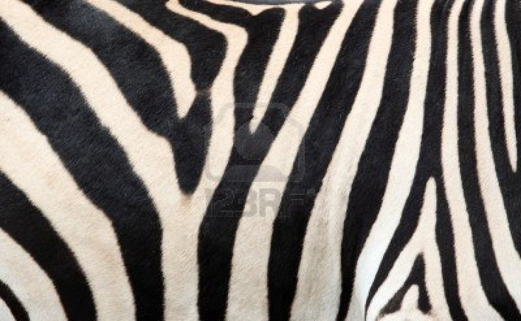 Zebra skin - photo#6