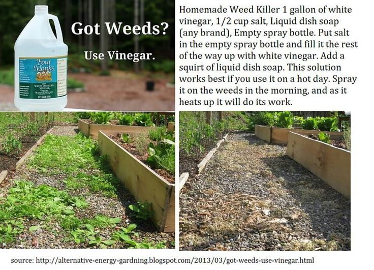Natural Weed Killer For The Home Pinterest