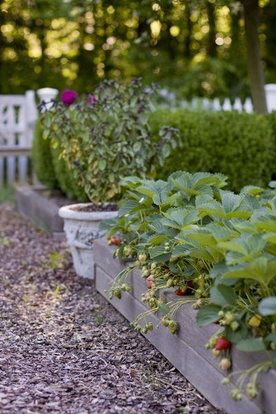 The strawberry bed Garden Pinterest