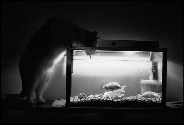 ESTADOS UNIDOS, 1984.  © Josef Koudelka / Magnum Photos
