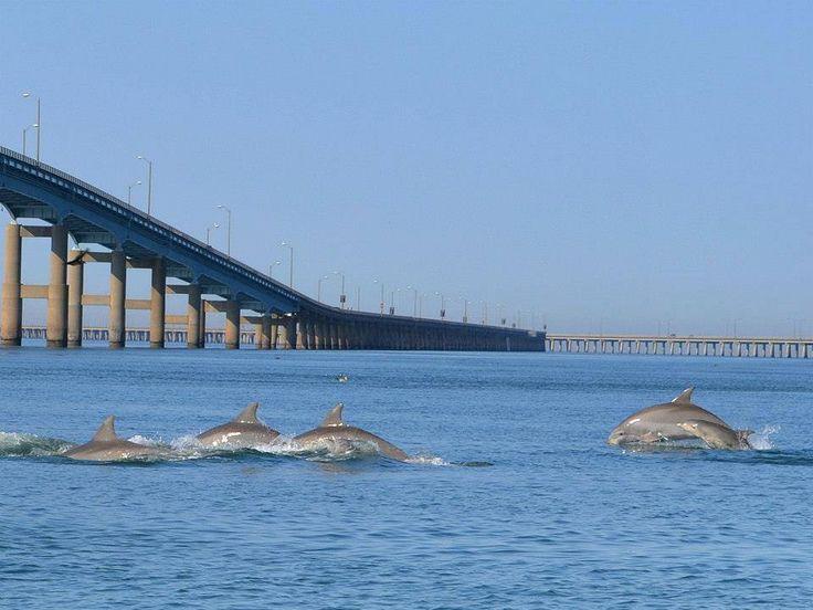 Chesapeake Bay Bridge Tunnel Va Favorite Places On